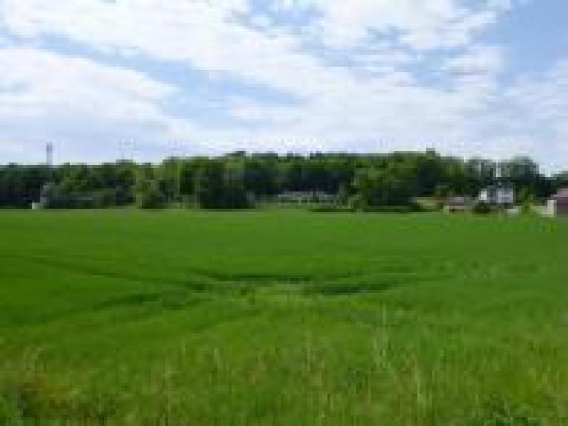 Dražba stavebního pozemku v Průhonicích